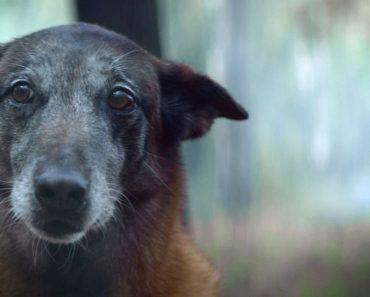 Provavelmente a Melhor Campanha De Sensibilização Para o Não Abandono De Animais 6