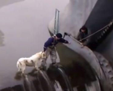Vídeo Comovente Em Que Habitantes Arriscam a Vida Para Resgatar Cão De Afogamento Em Barragem 7