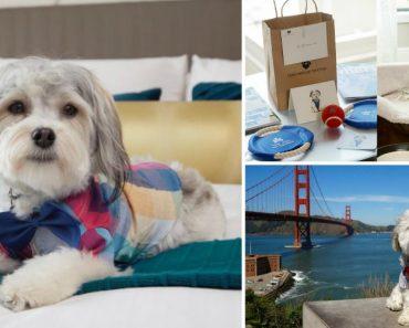 Hotel Disponibiliza Um Cão Como Companheiro De Quarto 4