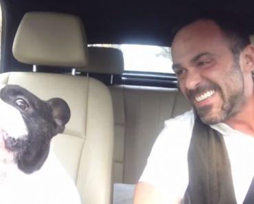 Adorável Bulldog Francês Faz Maravilhoso Dueto Com o Seu Dono 4