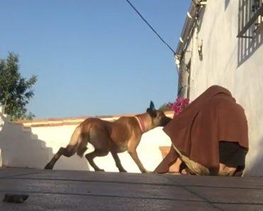 Cão Vê Dono Pela Primeira Vez Depois De Umas Férias e a Sua Reação é Adorável 3