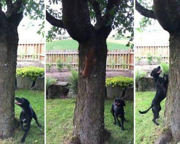 Esquilo Atrevido Desafia Cão Em Divertida Perseguição à Volta De Uma Árvore 4