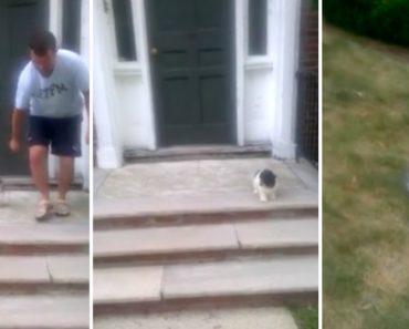 Cachorrinho Com Medo De Descer Escadas Encontra Solução Alternativa 5