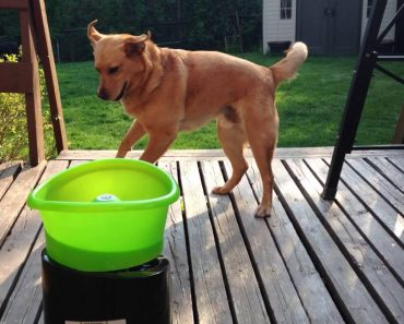 Cão Resgatado Mostra Toda a Sua Felicidade Com Novo Brinquedo 5