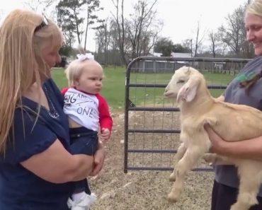 Bebé e Cabrinha Têm a Mais Hilariante Conversa 8