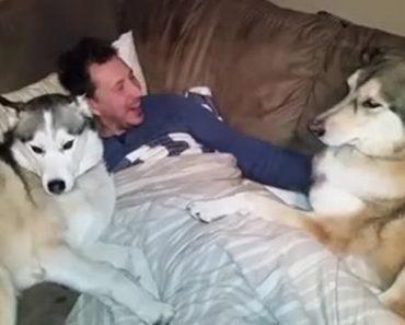 Cão Ciumento Exige Mais Atenção Do Seu Dono 7