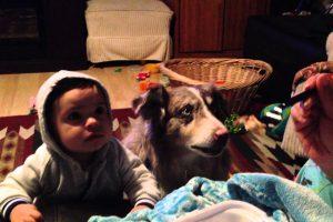 """Cão Aprende a Dizer """"Mamã"""" e Consegue Roubar Atenções a Bebé 9"""