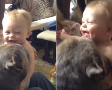 Pitbull Faz o Ataque Mais Feroz De Cócegas a Um Bebé Alguma Vez Já Visto 7