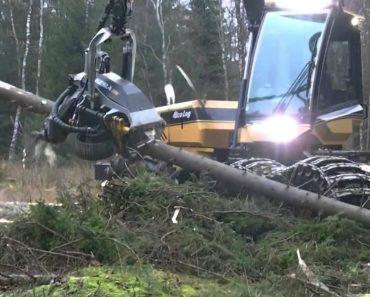 Máquina Corta Árvores Em Pequenos Troncos Numa Questão De Segundos 8