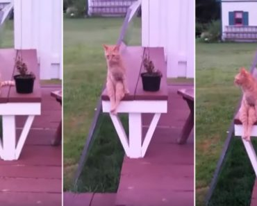 Gato Tem Reação Hilariante Quando Dona Lhe Pede Para Se Sentar 9