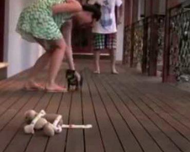 Cachorrinho Tenta Defender a Dona Quando Marido Finge Agredi-la 1