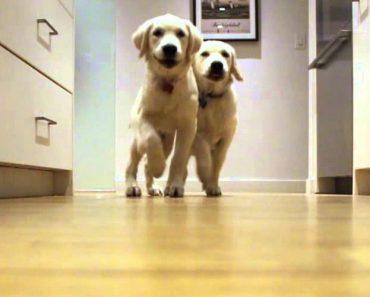 Dono Faz Excelente Vídeo Mostrando o Crescimento Dos Seus 2 Cães 6
