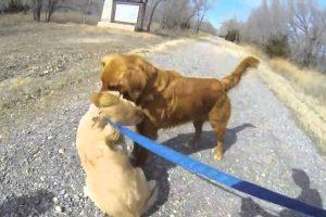 Reencontro Emocionante Entre Um Cão e a Sua Mãe Desde Que Foi Adotado Com 11 Semanas 7