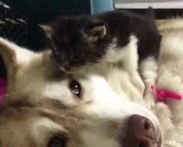 Momento Em Que Gatinha Órfã Chega Ao Seu Novo Lar e é Apresentada Ao Cão Da Casa 1
