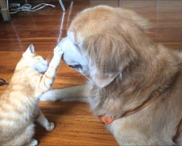 A História Do Nascimento De Uma Grande Amizade Entre Um Cão e Um Gato 9