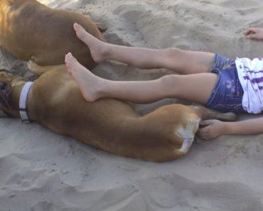 Menina Aprende Porque Não Se Deve Incomodar Um Cão Quando Está a Descansar Na Areia 2