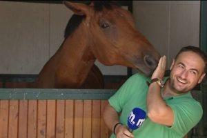 Cavalo Impede Jornalista De Fazer O Seu Trabalho Por Ser Verdadeiramente Adorável 10