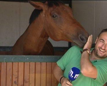 Cavalo Impede Jornalista De Fazer O Seu Trabalho Por Ser Verdadeiramente Adorável 7