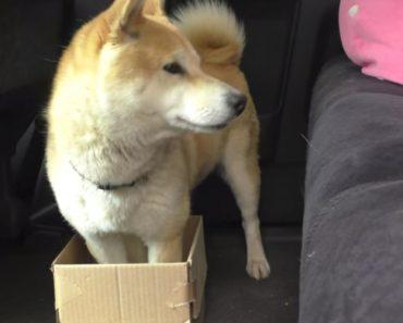 A Reação De Um Cão Ao Ver a Sua Caixa Cada Vez Mais Pequena 9