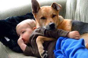 Criança Doente é Reconfortada Pelo Seu Fiel e Inseparável Amigo 10