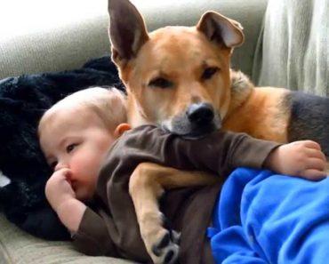 Criança Doente é Reconfortada Pelo Seu Fiel e Inseparável Amigo 5