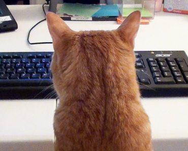 Como é a Vida De Quem Trabalha Em Casa... e Tem Gatos! 3