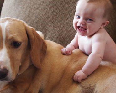 Muito Cuidado Com Crianças e Animais Juntos... Podem Criar Momentos Maravilhosos! 6