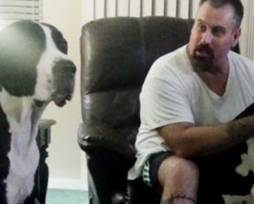 Cão Fica Cheio De Ciúmes Ao Ver o Dono a Dar Carinho Ao Irmão 1
