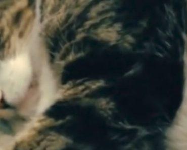 O Gato Com o Acordar Mais Mal Humorado Que Alguma Vez Viu 3