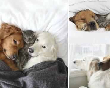 A Amizade Entre Dois Cães e Um Gato Que Está a Derreter Os Corações Dos Internautas 6
