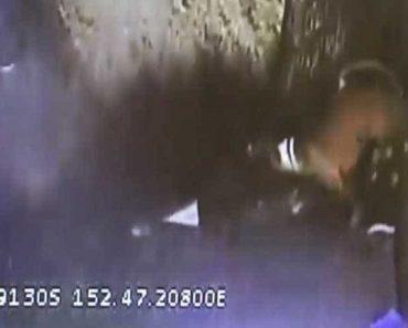 Cão Conseguiu Sobreviver Depois De Ser Atirado Para Camião Do Lixo 4