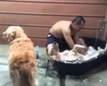 Este Cão Adora a Hora Do Banho, Até Parece Que Está Num SPA 6
