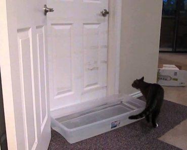 Gato Engenhoso Ultrapassa Qualquer Obstáculo Para Abrir a Porta 8