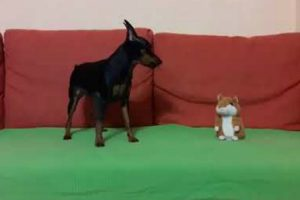 """Dono Descobre Como Um Brinquedo Consegue Deixar O Seu Cão """"Sem Palavras"""" 9"""
