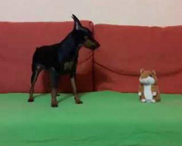 """Dono Descobre Como Um Brinquedo Consegue Deixar O Seu Cão """"Sem Palavras"""" 8"""