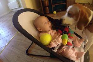 Cão Sente-se Culpado Por Fazer Bebé Chorar e Pede-lhe Desculpa De Forma Maravilhosa 10