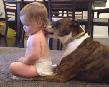 Mãe Capta Momento Maravilhoso Entre a Sua Bebé e o Seu Cão 7