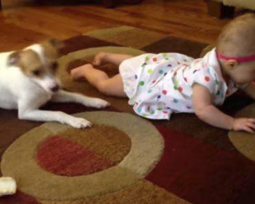 Adorável Cão Tenta Ensinar Bebé a Gatinhar 9