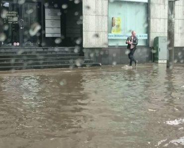 Gatinho é Salvo Depois De Condutor o Retirar De Rua Inundada 6