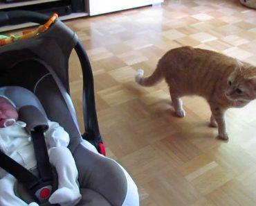 A Reação De Um Gato Ao Ver Um Bebé Pela Primeira Vez 6