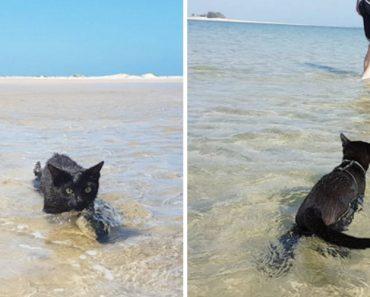 Nathan: a Gatinha Resgatada Que Adora Nadar No Mar 4