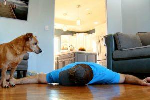 Depois Da Gata... Finge Que Morreu Para Testar a Reação Do Seu Cão 10