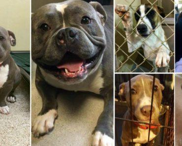 20 Fotos De Cães Que Mostram a Impressionante Diferença Do Antes e Depois Da Adoção 3