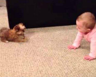 Cão Tem Reação Hilariante Ao Encontrar Bebé Pela Primeira Vez 3