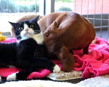 A Inseparável Relação Entre Um Cão Abandonado e Uma Gata Paralisada 3