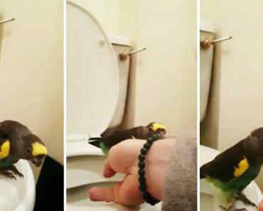 Dono Conseguiu Ensinar Papagaio a Fazer As Necessidades No Sanitário 5