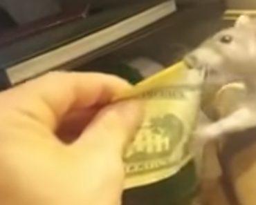 """Rato """"Viciado"""" Em Dinheiro Tenta Roubar As Notas Do Seu Dono 8"""