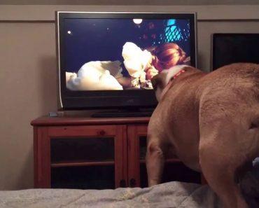 Bulldog Assiste a Filme De Terror e Tenta Avisar Personagem Que Corre Perigo 4