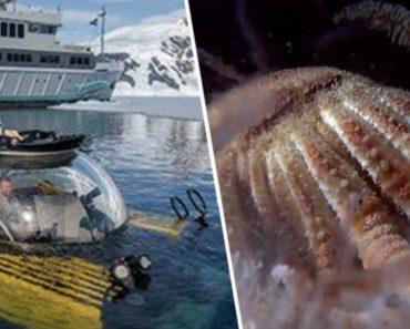 Pela 1ª Vez Exploradores Mergulham 1000 Metros De Profundidade No Antártico e Captam Imagens Impressionantes 5