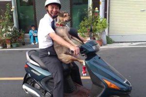 Cão Passeia De Scooter Com o Seu Dono Em Grande Estilo 6